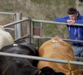 Average entitlement value set to drop further – here's what it means for young farmers