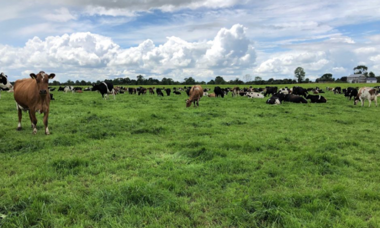 Time to put a plan in place for the breeding season…if you haven't done so already