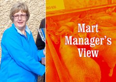 Mart manager's view: Online system failure at Ballinasloe Mart