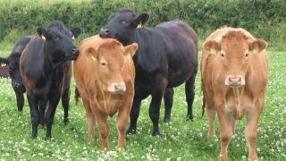 Farmers urged to consider clover swards to lower fertiliser costs