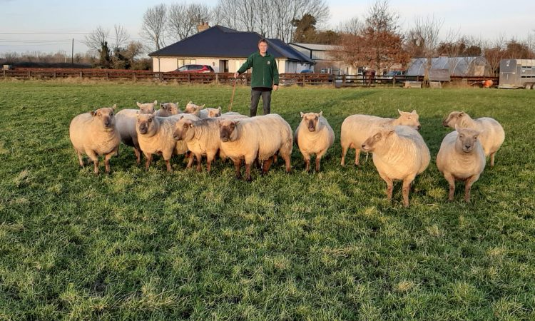 Sheep Focus: 'I find that the Vendéens are very prolific; I rarely have a single lamb'