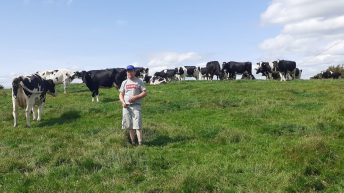 Replacing K after silage harvest is essential