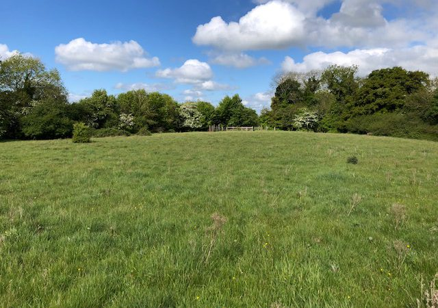 65.4ac property guiding at €5,900/ac to go for auction in Co. Kildare