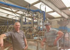 Dairy farm success with non-antibiotic approach to udder health issues