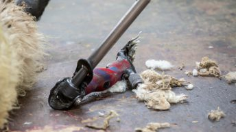 Farmers facing the possibility of having to subsidise all shearing costs