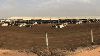 Views of a visitor: Dairying in Dubai, UAE