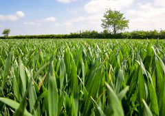 New €7 million sustainable crop production project focuses on underutilised crops