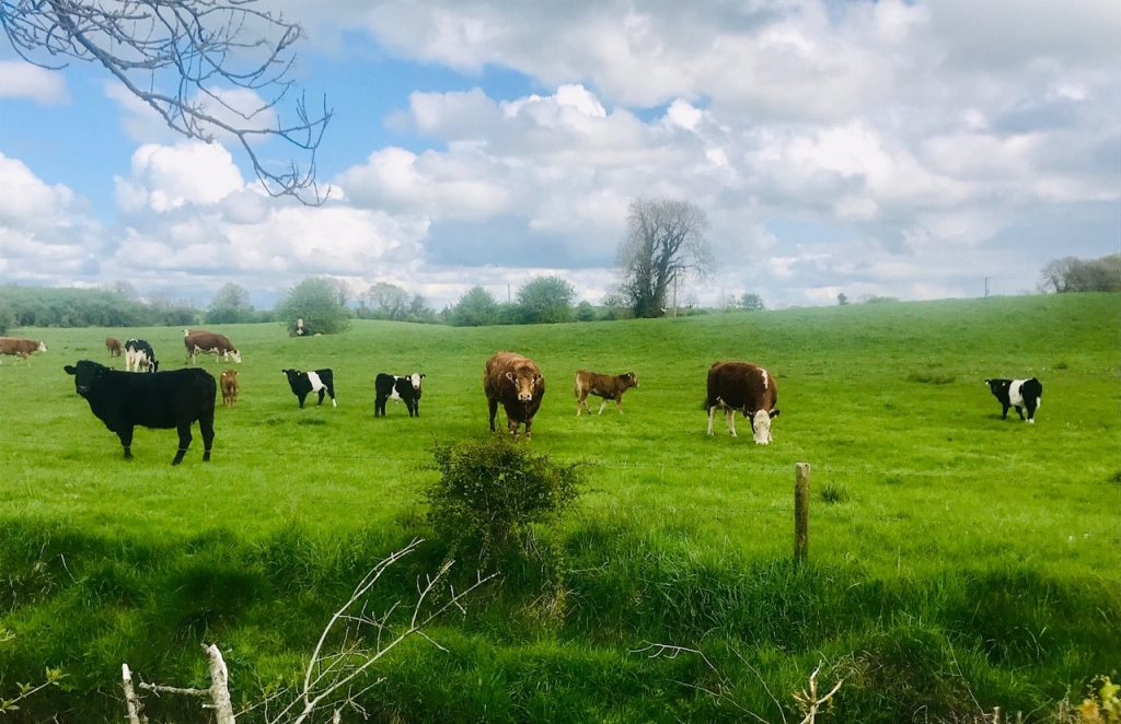 Ciaran Fitzgerald: 'Is Irish agriculture destined to struggle and drift?'
