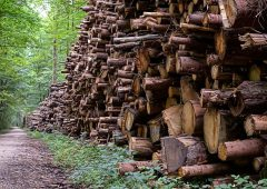 IFA claims licence 'crisis' threatens €500 million forestry industry