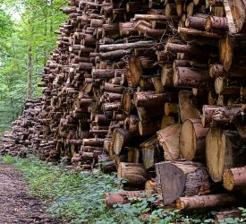 Forest owners 'may be unaware of true value of their timber'