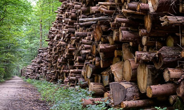 'Supply of timber drying up' due to felling and forestry licences issue