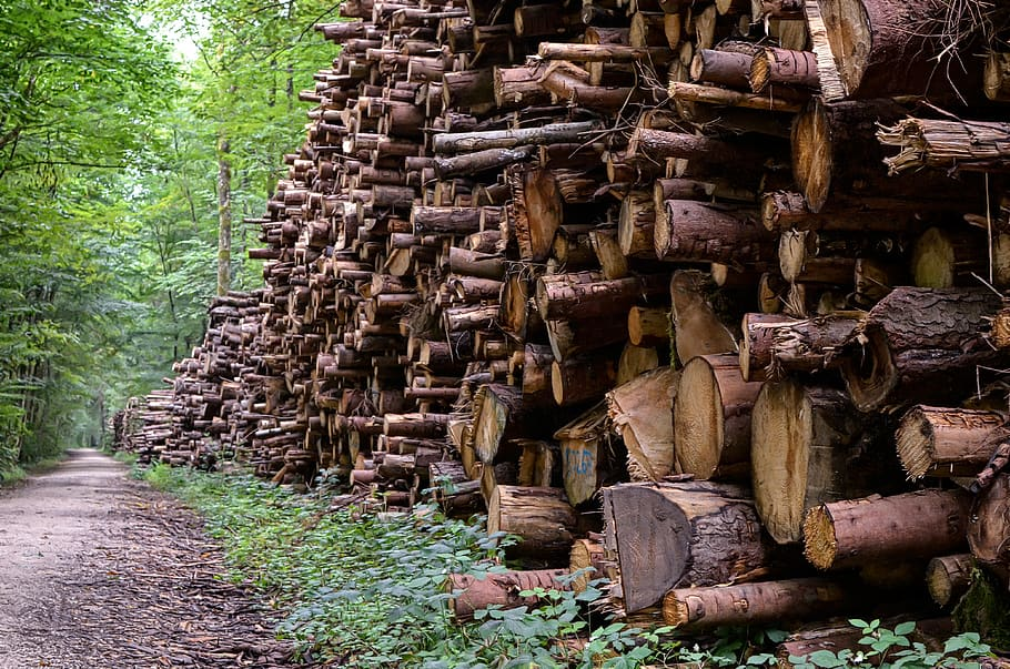 'Job losses loom' in forestry sector – Nolan