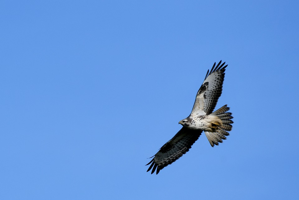 Investigations ongoing into poisoning of 23 buzzards