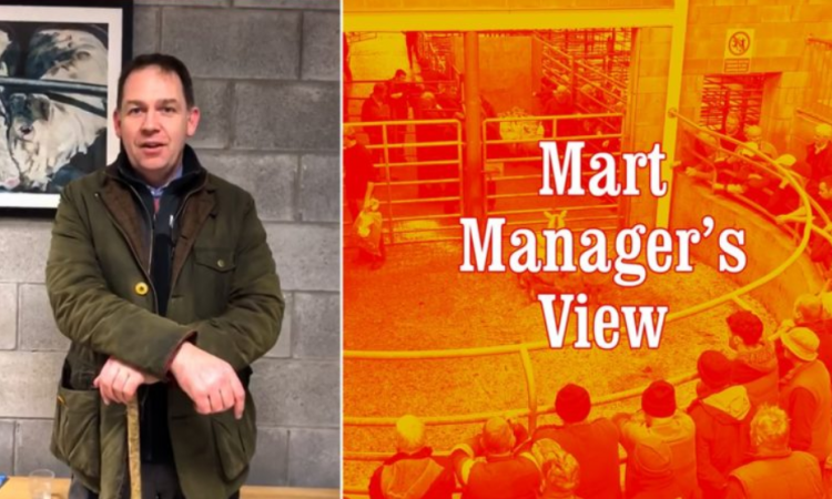 Improved prices for beef and forward cattle at Carnew Mart