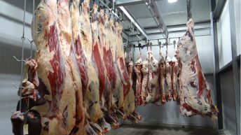 22 of 23 inspections in meat plants carried out unannounced so far in August