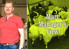 Ewes with lambs at foot make up to €304/head at Manorhamilton Mart
