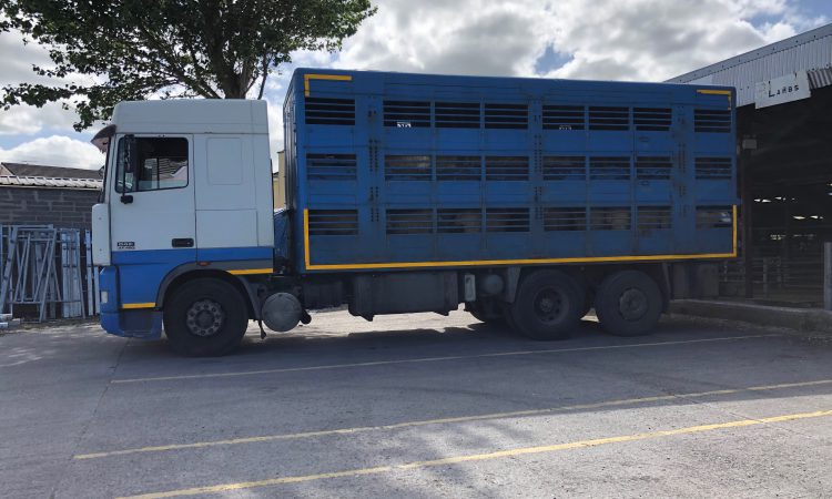 Truckloads of lambs arriving from the UK: 'It's a disgrace'- ICSA