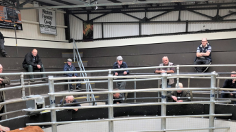 Buyers to be let back to mart ringsides from next week