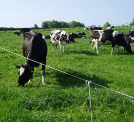 Signpost Programme: Farm organisations welcome launch