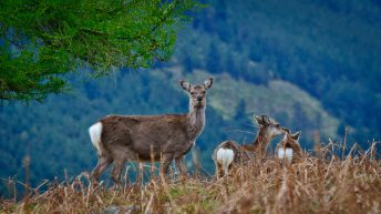 Farmers warned of deer hunters calling under 'false representation'