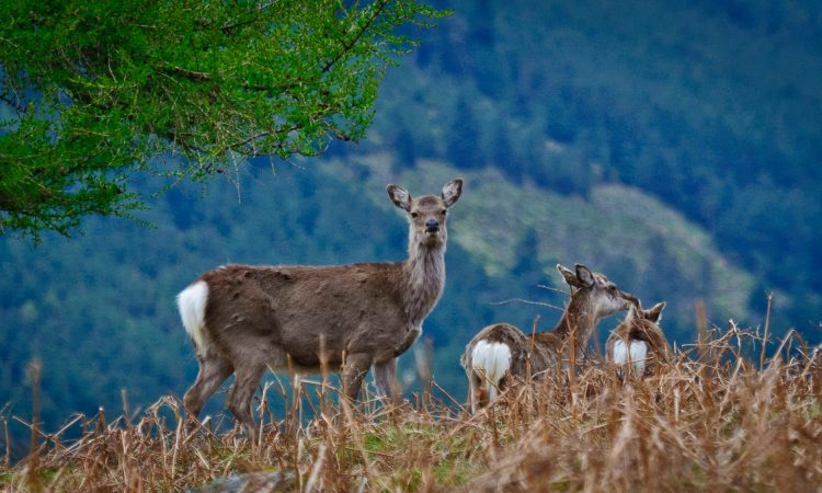 Farmers warned of deer hunters calling under 'false representation'