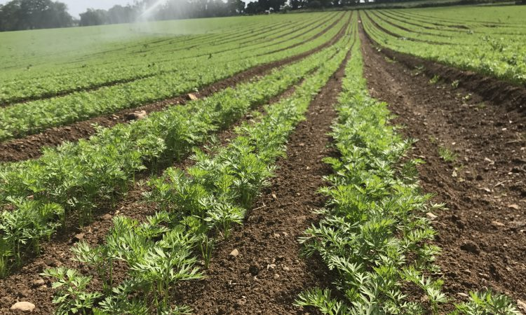 'It costs €100/ac to irrigate a crop just once'