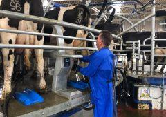 Liquid milk supplies rise but farmer numbers drop in 2019