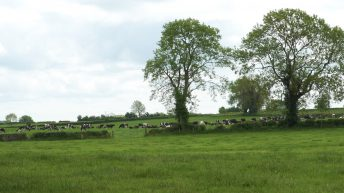 Grass growth: 'Well needed rain' kickstarting growth rates again in Co. Tipperary