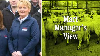 Strong trade at Raphoe Mart sees a full clearance of 1,100 lambs
