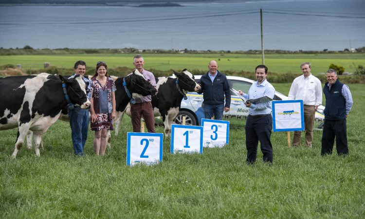 Kerry Holstein Friesian herd competition officially launched