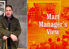 Northern Irish demand for stores and beef lots at Carnew Mart
