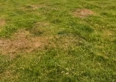 GrowthWatch: Deciding on a grassland management plan for the current dry spell