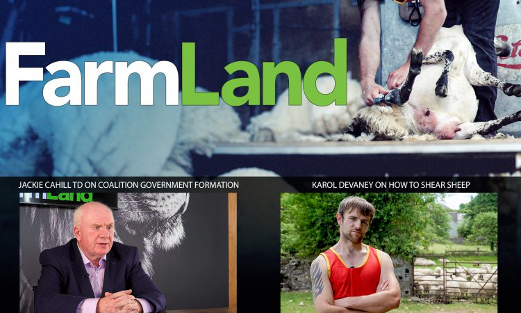FarmLand: Agri insight on government talks; and shearing with the best