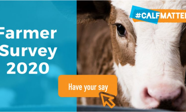 #Calfmatters survey: Want to be in with a chance of winning a calf jacket?