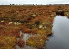 The Living Bog Project listed as finalist in Natura 2000 Awards