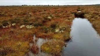Grant funding doubled for 25 community peatland initiatives