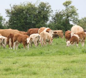 Grass advice: 3 tips to aid the grazing season on beef farms