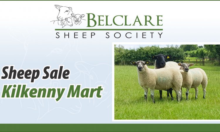 Increase the profitability of your flock with Belclare genetics