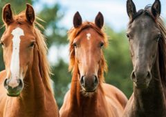 Letter to the editor: Levies for horse breeders are 'unjust and unfair'