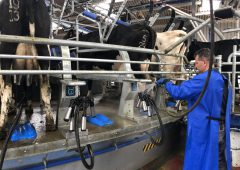 Ornua PPI lifts slightly for June milk amid 'stable returns'