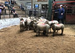 Sheep marts: Lamb trade continues in positive fashion