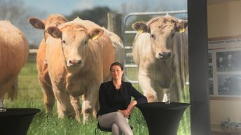 'Anthelmintic resistance is more common on cattle farms than previously thought'
