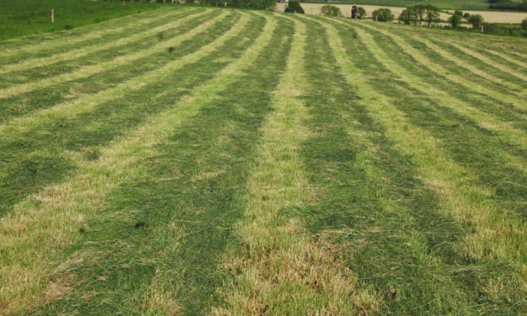 Is pre-mowing paddocks worthwhile or is it a waste of time?
