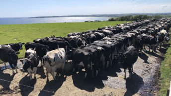 Dairy Focus: Milking 265 Holstein Friesian cows just off the coast of Co. Cork