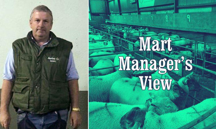 'Factory lambs were back €5-7/head on last week' – Ballymote's Stephen Hannon