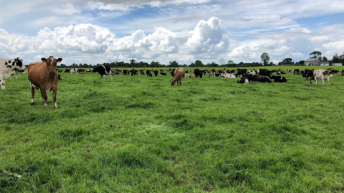 Dairy management: Improving the quality of pastures and reseeding