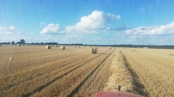 Straw: 50% decrease in yield being reported in the midlands