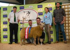 Irish Charollais Sheep Society to host 30th anniversary sale