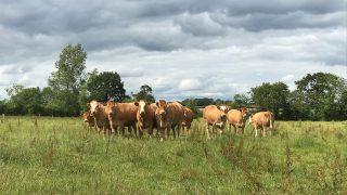 CAP: Beef and sheep sectors strategies 'in disarray' – ICSA