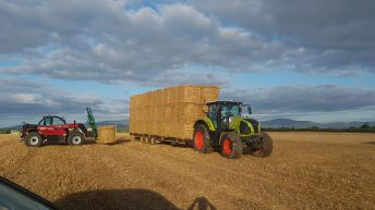 Straw: Demand strong, but early days for prices